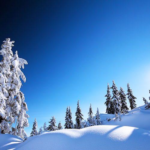 snow-on-tree